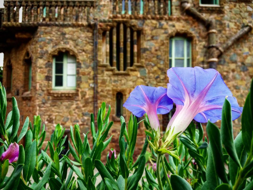 El jardí de Bellesguard!